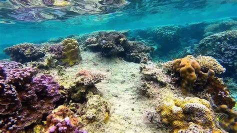 snorkeling  karimunjawa island indonesia gopro