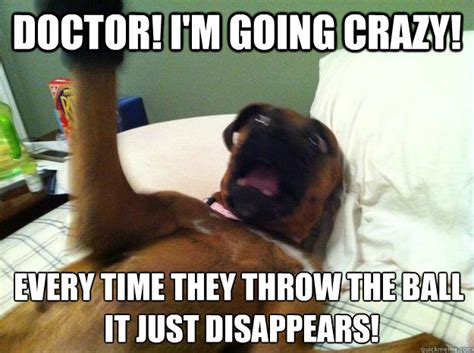 Dog Doctor Meme - doctor i m going crazy every time they throw the ball it just disappears insane psychiatric