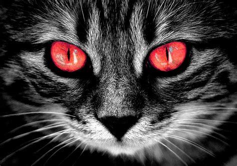 free cat creepy horror max pixel