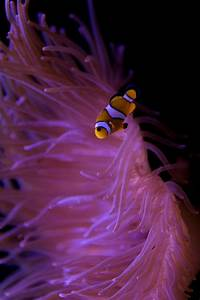 17 Best Images About Nemo U0026 Marlin On Pinterest Posts