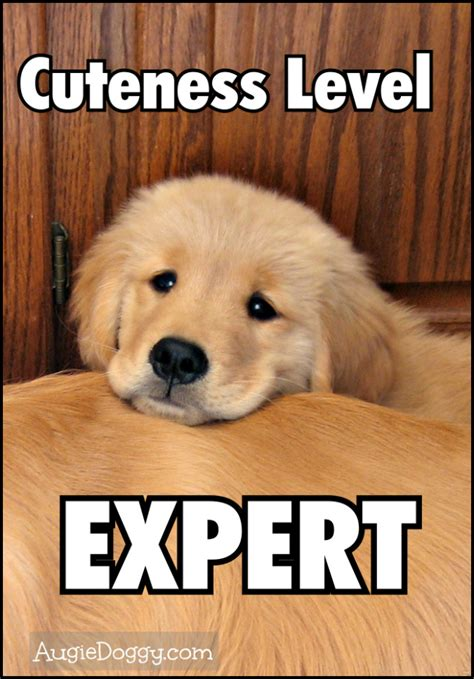 Golden Retriever Meme - golden memes image memes at relatably com