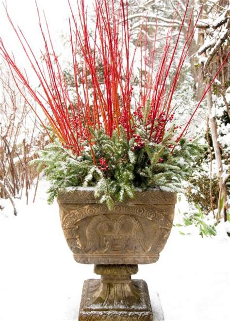 cheerful winter container gardens midwest living
