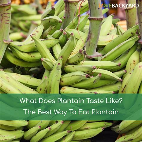 What Does by What Does Plantain Taste Like The Best Way To Eat