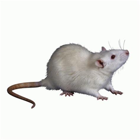 Myelin Repair Foundation grants license for novel mouse ...
