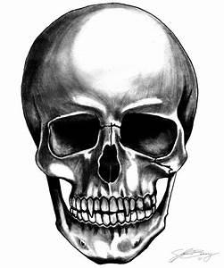 Vampire Skull by dieFused.deviantart.com on @deviantART ...