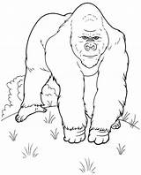 Coloring Gorilla Printable Animals Colouring Library Line Clipart Drawing Getcolorings Getdrawings License Insertion Codes Personal sketch template