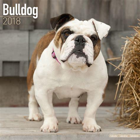 bulldog calendars ukpostersabposterscom