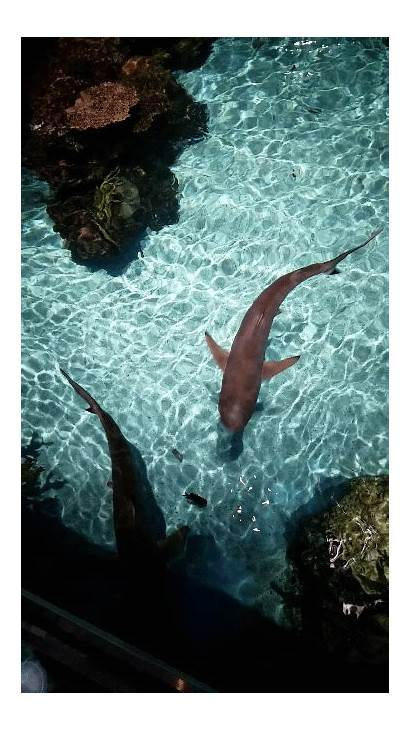 Sea Aquarium Shark Reef Sharks Tip Reblog