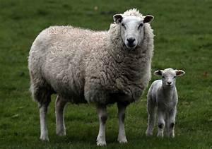 El blog de ViverEnglish: UNIT 8: ANIMALS (PRE-PRIMARY 3, 5 ...  Animal