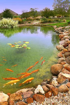 Materiel et accessoires pour bassin de jardin naturel