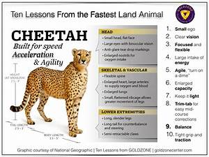 Ten Lessons From The Fastest Land Animal