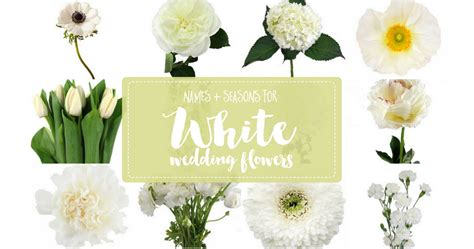 Types Of White Flowers, Names