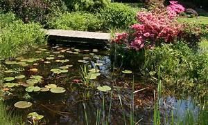 Heimische Pflanzen Für Den Garten : biotop naturteich ~ Michelbontemps.com Haus und Dekorationen
