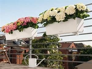 Jardiniere Chez Jardiland : 1000 images about fleurs et potager flowers on ~ Premium-room.com Idées de Décoration