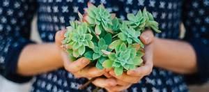 Plante Suspendue Intérieur : 5 plantes d 39 int rieur increvables pour jardiniers d butants ~ Teatrodelosmanantiales.com Idées de Décoration