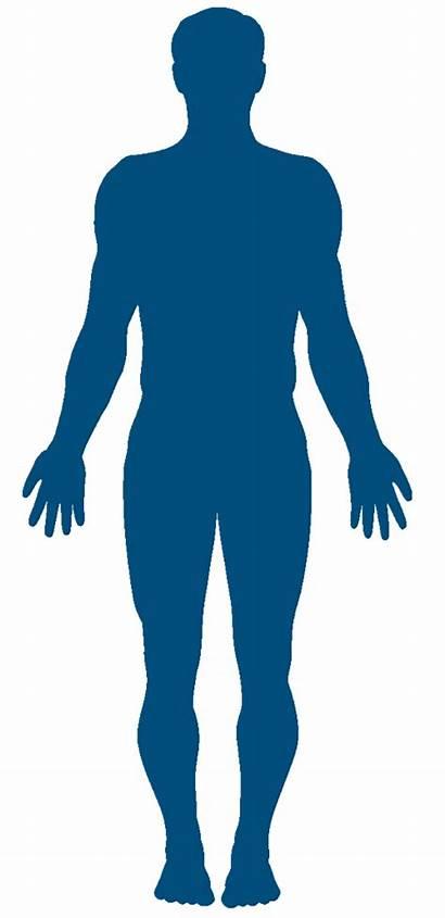 Human Silhouette Clipart Beneficios Caminar Library Clip
