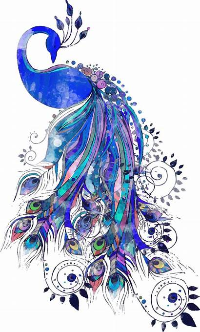 Peacock Watercolor Sublimation Drawing Feather Transfer Tattoo