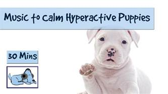 how to calm a hyper cat 30 minutes of to calm hyperactive puppies