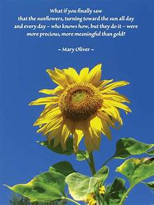 Sunflower, Quotes, Or, Poems, Quotesgram