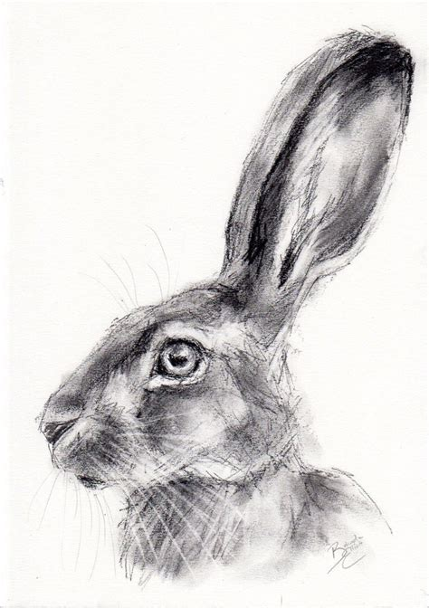 original  wildlife charcoal sketch   hare animal