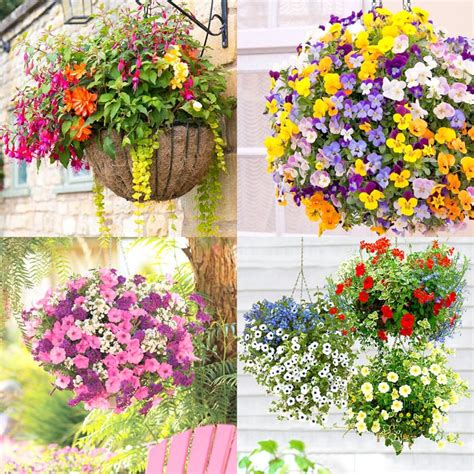 best flowers to plant how to plant beautiful flower hanging baskets 20 best hanging basket plants a piece of