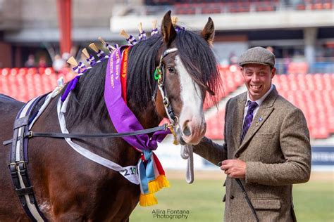 tullymore sir banks shire sydney easter royal joseph darkmoor supreme champion horse