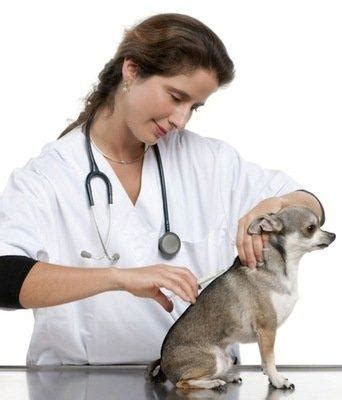 calendario de vacunacion en perros perrosamigoscom