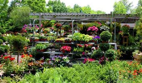 plant nursery  sale  arizona bizillacom prlog