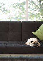 furniture fabric  pet owners cuteness