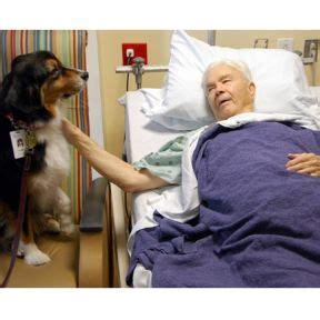 therapy dogs  cure cancer psychology today