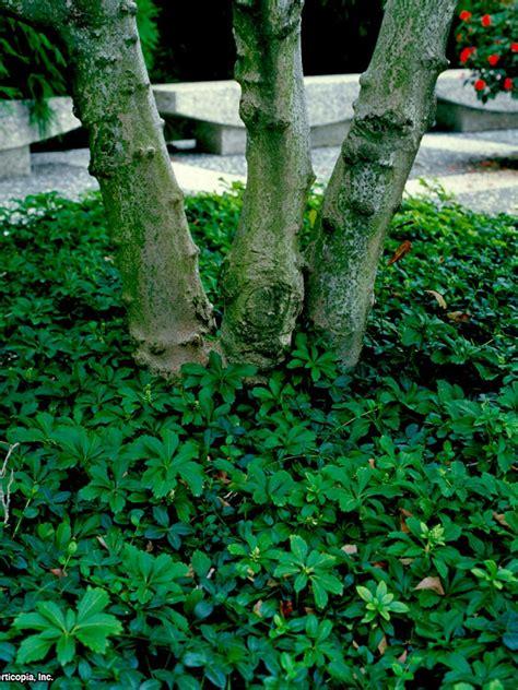 grow grass   shade  tos diy