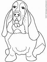 Hound Coloring Pages Dog Beagle Basset Bassett Dogs Coon Drawing Adults Adult Printable Books Colouring Getcolorings Honden Printables Animal Kleurplaat sketch template