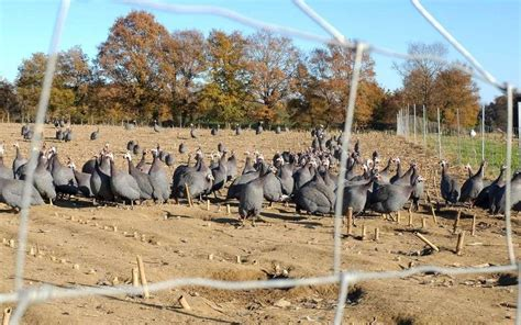 chambre d agriculture 57 virus aviaire dans les landes la profession agricole