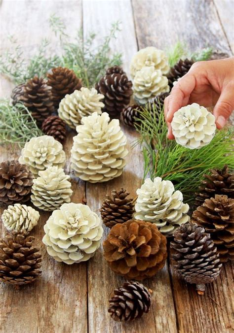 easiest  minute bleached pinecones  bleach