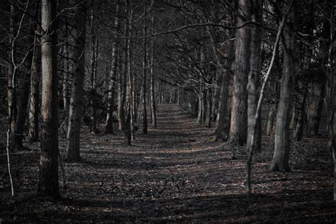 Creepy Backgrounds Scary Forest Wallpaper Wallpapersafari