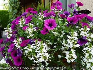 Jardiniere Fleurie Plein Soleil : trouver modele jardiniere fleurie ~ Melissatoandfro.com Idées de Décoration