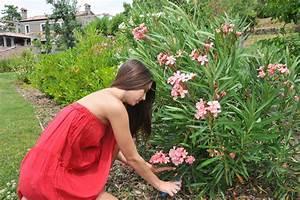 Oleander Braune Blätter : oleander hat braune flecken ursachen und ma nahmen ~ Lizthompson.info Haus und Dekorationen