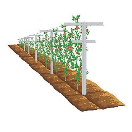 7 Foot Trellis by Ecotrellis 2 Pack 7 Raspberry Trellis With