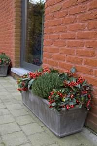 Plantes D Hiver Extérieur Balcon : top 10 des plantes pour jardini res d 39 hiver jardin ~ Nature-et-papiers.com Idées de Décoration