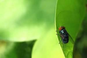 Hausmittel Gegen Fliegen : hausmittel gegen stubenfliegen so werden sie sie los ~ Articles-book.com Haus und Dekorationen