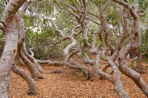 Elfin Forest Natural Area