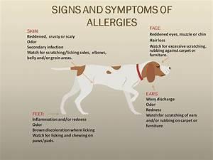 allergies dalton veterinary associates With dog food allergy symptoms