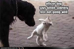bogel funny pictures: Together funny dog and cat picture ...