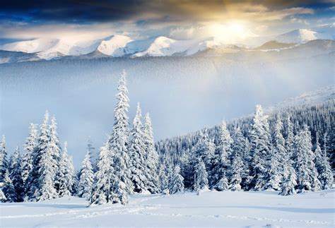 Nature Winter Mountain Christmas Tree Snow Sun Rays Hd