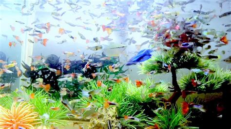 feed  fish tank aquariums hd top  fish