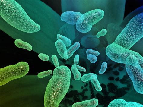 Bacteria  Things You Didn't Know
