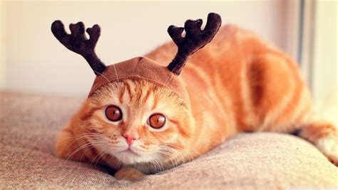funny reindeer pictures  images
