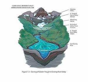 Nature Illustrator  Line Art  Diagrams  Info Graphics