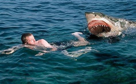 Best Halloween Attractions In Nj by Shark Attack Swimmer Great White Shark