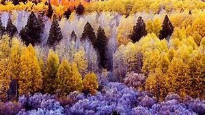 Kostenlose Bilder Herbst : herbstwald hintergrundbilder ~ Yasmunasinghe.com Haus und Dekorationen